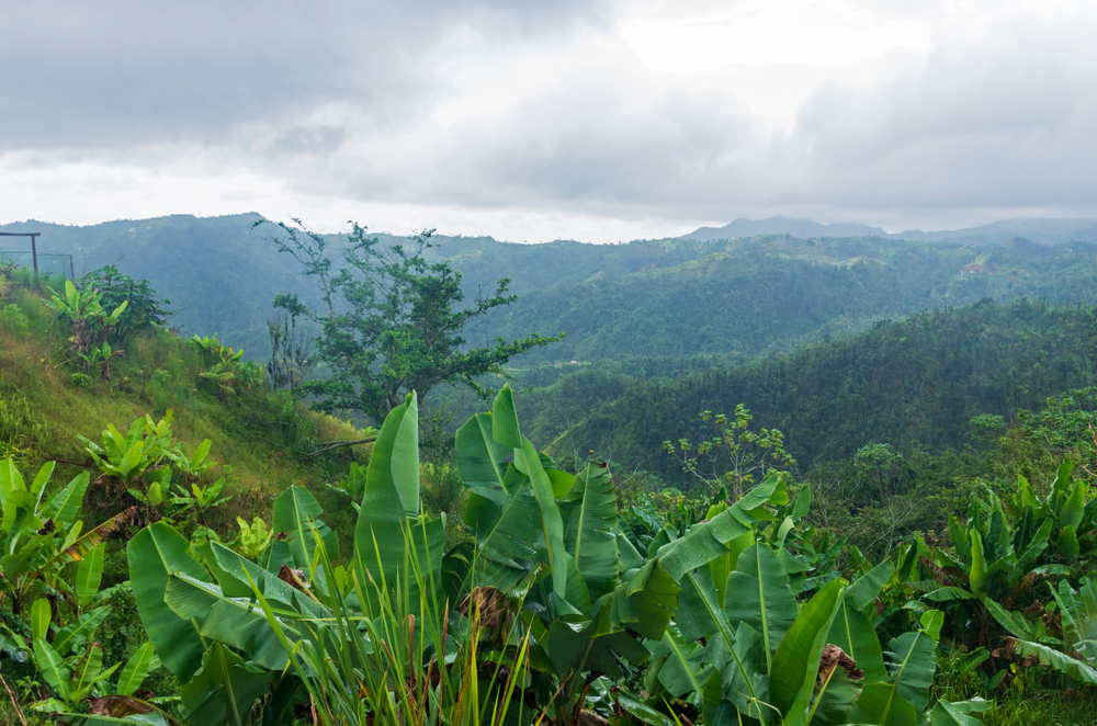 ODR: Road Trip to Ciales & Orocovis
